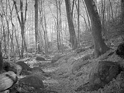 Ramapo Mountains